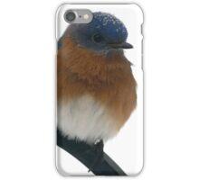 Eastern Bluebird iPhone Case/Skin