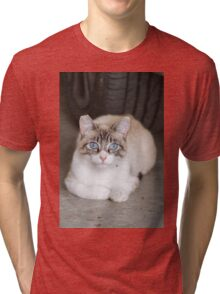 curious cat Tri-blend T-Shirt