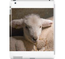 New-born Lamb under Heat Lamp iPad Case/Skin