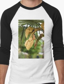 palm tree in bloom Men's Baseball ¾ T-Shirt