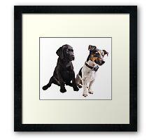 cute little dogs sitting Framed Print
