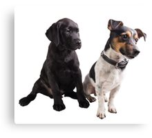cute little dogs sitting Canvas Print