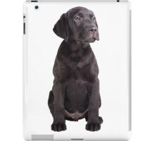 cute little black labrador retriever puppy iPad Case/Skin