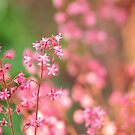 Heuchera by Heather Thorsen