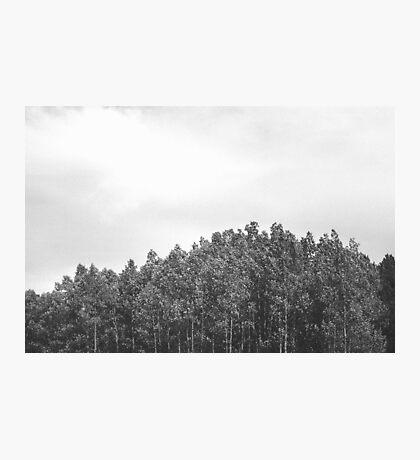 Simplistic Tree Landscape (FILM) Photographic Print