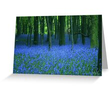 Bluebell, wood. Greeting Card