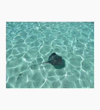 Stingray in Moorea, French Polynesia Photographic Print