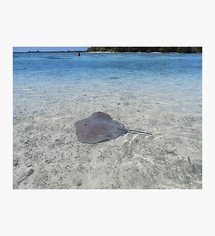 A Stingray by a small island near Moorea, French Polynesia Photographic Print