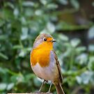 My Garden Buddy by David  Rowlatt