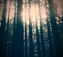 IN TO THE DARK WOODS image 2 by Allysymons