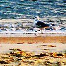 Seagull on Virginia Beach at Dawn by Susan Savad