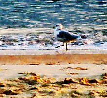 Seagull on Virginia Beach at Dawn by Susan Savad