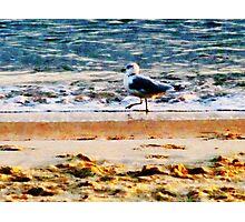 Seagull on Virginia Beach at Dawn Photographic Print