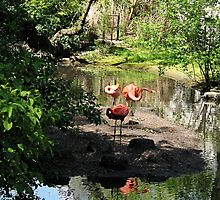 Three Flamingos by Susan Savad