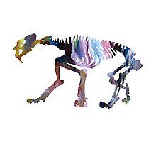 saber toothed tiger Photographic Print