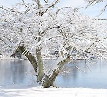 Winter blossoms - Cherry Tree  by Poete100