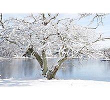 Winter blossoms - Cherry Tree  Photographic Print