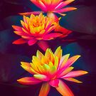 Three Waterlilies by Chris Lord