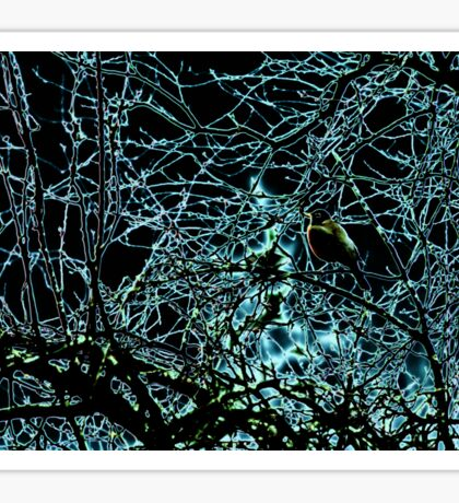 Robin Watching Light Phenomena  Sticker