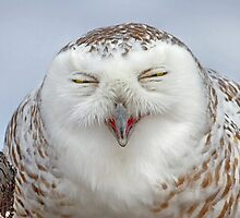 Smiling Snowy Owl by Jim Cumming