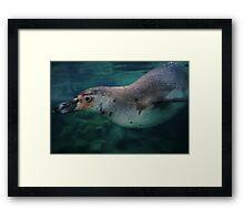 Swimming Penguin - limited supply Framed Print