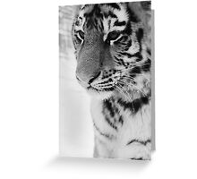 Snowy Tiger Greeting Card