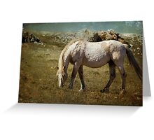 Cloud - Pryor Mustang Greeting Card