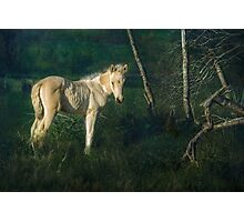 Little Blue-Eyed Filly Photographic Print