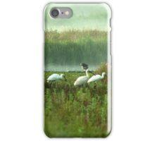 Spoonbills in my backyard iPhone Case/Skin