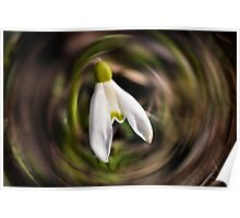Blooming Snowdrops Poster