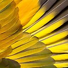 St Vincent Parrot wing by heidiannemorris
