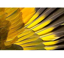 St Vincent Parrot wing Photographic Print