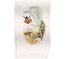 A monograph of the Trochilidæ or family of humming birds by John Gould 1861 V5 188 Poster
