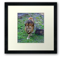 All Hail the King of the Jungle Framed Print