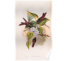 A monograph of the Trochilidæ or family of humming birds by John Gould 1861 V4 186 Poster