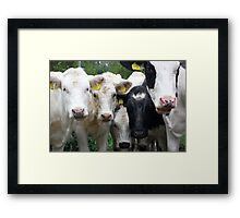 Cow (How) Are You Today? Framed Print