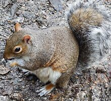 Squirrel eating by Deb Vincent