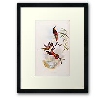 A monograph of the Trochilidæ or family of humming birds by John Gould 1861 V2 110 Topaza Pella Framed Print