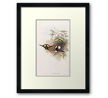 A monograph of the Trochilidæ or family of humming birds by John Gould 1861 V4 210 Framed Print