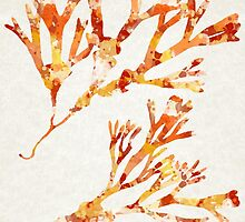 Ocean Seaweed Botanical Art by Christina Rollo