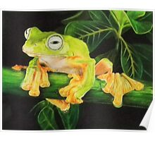 Musky Flying Frog Poster