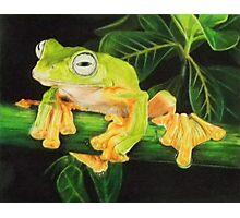 Musky Flying Frog Photographic Print