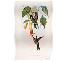 A monograph of the Trochilidæ or family of humming birds by John Gould 1861 V4 130 Poster