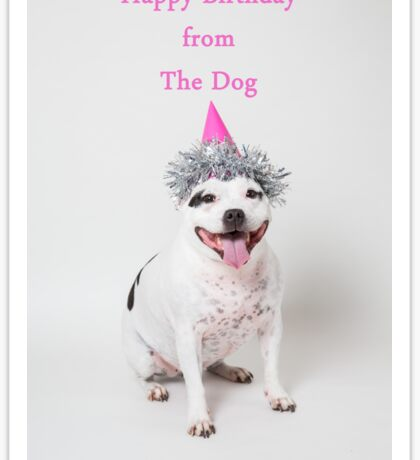 Happy Birthday from The Dog Sticker