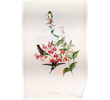 A monograph of the Trochilidæ or family of humming birds by John Gould 1861 V5 024 Poster