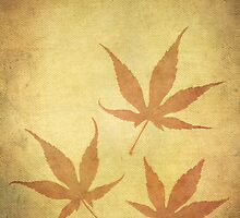 Japanese Maple Leafs by Madeleine Forsberg