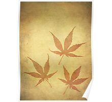 Japanese Maple Leafs Poster