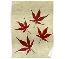 Japanese Maple Leafs II Poster