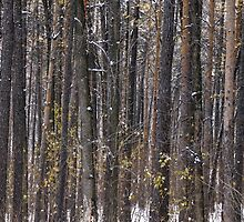 The Pine forest by amekamura