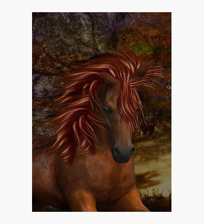 Flame .. A Wild Horse Photographic Print